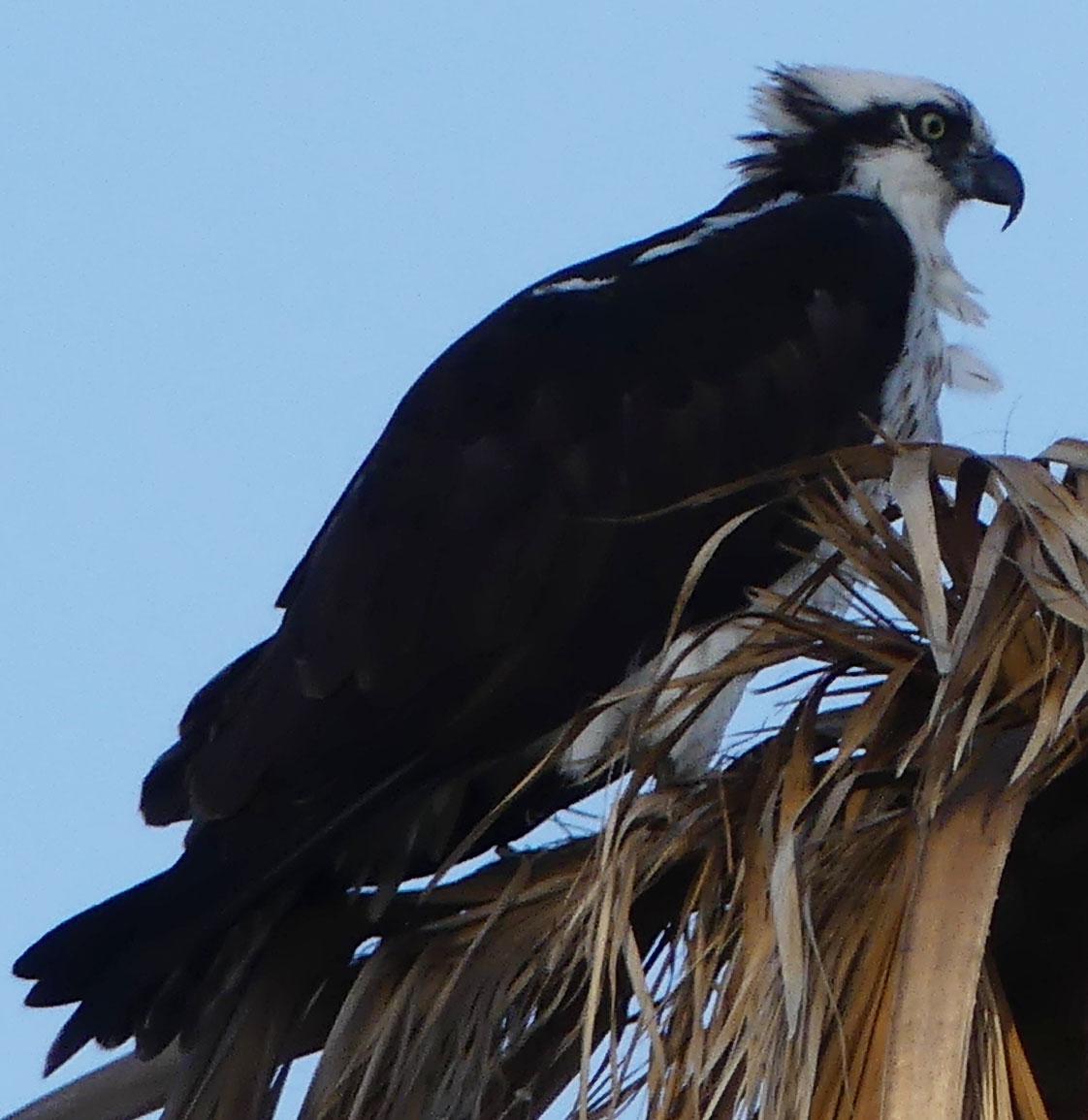 Cabo Birding